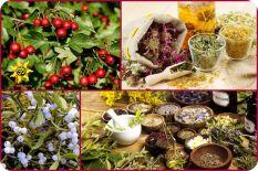 Химический состав растений: Витамины