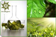 Химический состав растений: Углеводы