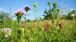 Химический состав растений: Липиды
