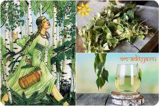 Береза - лекарственное растение от союза стихий Огня и Воды