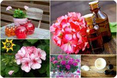 Герань (журавельник) - любимый цветок для семьи