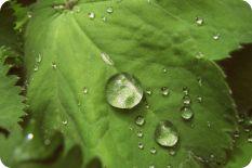 Химический состав растений: вещества вторичного синтеза